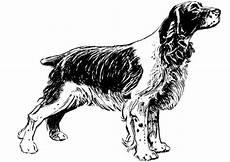 malvorlage hund cocker spaniel ausmalbild 13708