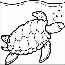 Turtle Coloring Sheet Free Printable Swimming Turtle Coloring Page For