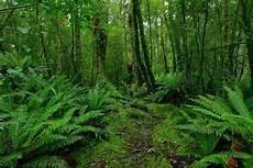 Moratorium Hutan Berlanjut Atau Tenggelam Komunitas