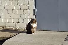 Gambar Kucing Jalanan Kucingcomel