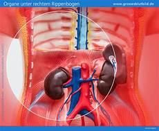 Organe Unter Der Rechten Rippe Ursachen Bei Schmerzen