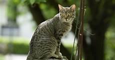Was Tun Gegen Katzen Im Garten - katzenkot im garten unterbinden mein sch 246 ner garten