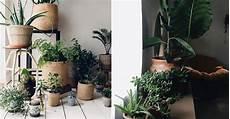 Welche Pflanze F 252 R Welches Zimmer 7 Geniale Und N 252 Tzliche