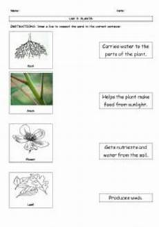 49 plant structure and function worksheet plant cell and animal cell diagram worksheet pdf