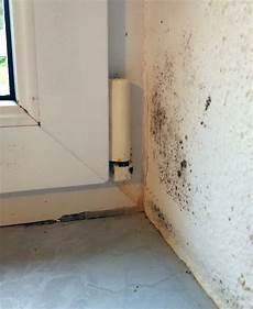 luftfeuchtigkeit schlafzimmer senken schimmel an der wand unsch 246 n und gesundheitlich gef 228 hrlich