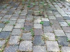 Unkraut Zwischen Steinplatten Wie Entfernt Es