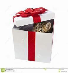 gatito dentro de la caja de regalo foto de archivo de animal abierto 43696846