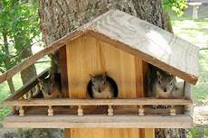 squirrel houses plans free plans build a squirrel house bird house kits bird