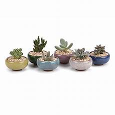 vasi per cactus pots for succulents