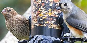 The Best Bird Feeders Reviews By Wirecutter