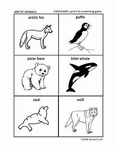 arctic animals coloring pages for preschoolers 17270 flashcards arctic animals preschool primary by abcteach teaching resources tes