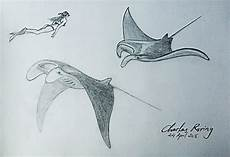 Kumpulan Mewarnai Gambar Sketsa Ikan Pari Desain