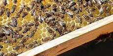 sterben bienen im winter m 228 rkische allgemeine nachrichten f 252 r das land brandenburg