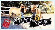 wie viel kostet ein pferd blondis auf fjordis