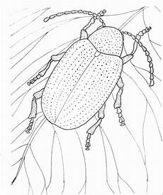 Gratis Malvorlagen Blatt Kaefer Auf Einem Blatt 2 Ausmalbild Malvorlage Tiere