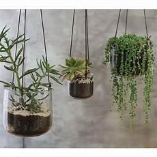 plante suspendue verre buy nkuku viri hanging glass planter clear large amara