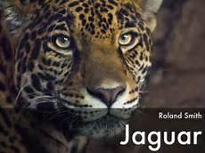 Jaguar Roland Smith by Jaguar By Roland Smith By Salgadas