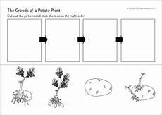 plant growth worksheet for grade 2 13757 potato plant growth sequencing worksheet sb9782 sparklebox σπορά