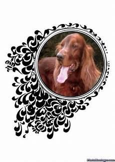 Hund Bellt Im Garten Ab Wann Erlaubt Lautstaerke