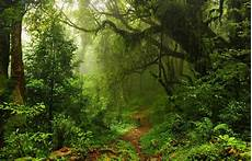 Nature Path 4k Wallpaper by Path In Forest 4k Ultra Hd Wallpaper Background Image