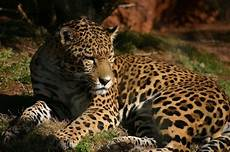 world s most beautiful animals