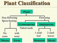 classifying plants worksheets 3rd grade 13524 lesson plan of plants flowering non flowering plants effective and creative lesson plans