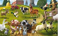 farm animals wallpaper 183 wallpapertag
