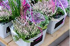 balkonpflanzen herbst winter herbstbl 252 und blumen f 252 r beet und balkon pflanzen breuer