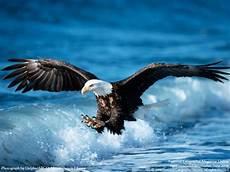 Beberapa Hal Tentang Burung Rajawali Hep