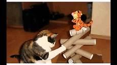 katzenspielzeug selber basteln katzenspielzeug selber machen ideen