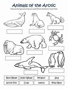 arctic animals printable coloring pages 17219 arctic animal coloring pages with regard to really encourage in best of animals arctic animals