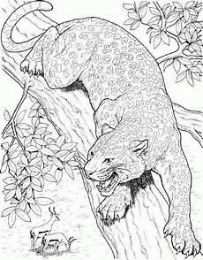 ausmalbild tiere gepard ausmalbilder1001 de