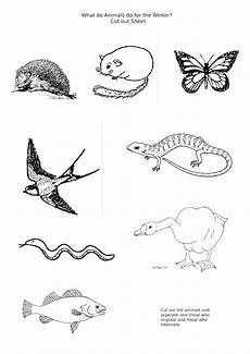 migrating animals coloring pages 17086 13 best images of where do animals hibernate worksheet winter animals printable activity