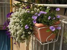 fiori invernali per balconi fiori da balcone