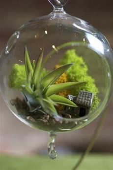 Pflanzen Wenig Licht - zimmerpflanzen die wenig licht brauchen