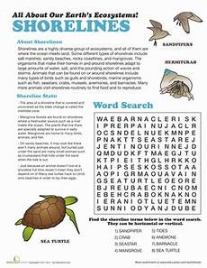shoreline ecosystem worksheet education com