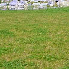 Pilze Im Rasen Rasenkrankheiten Bek 228 Mpfen Mein Sch 246 Ner