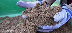 grow better plants with home made organic potting mixes