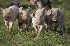 farm animals rspca political animal