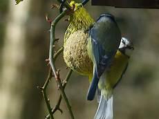vogelwelt im eigenen garten anbau vogelfutter im eigenen garten