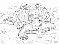 realistic ornate box turtle coloring page free printable coloring pages