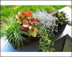 balkonpflanzen herbst winter winterharte balkonpflanzen herbst winter ganzj 228 hrig