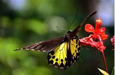 10 Gambar Kupu Kupu Hinggap Di Bunga Yang Indah Dan Lucu