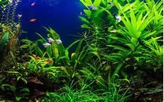 plante d eau aquarium d eau douce quelles plantes faciles choisir