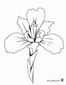 orquidea nacional para colorear imagenes para colorear la orquidea imagui