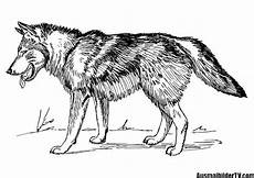 Malvorlagen Wolf Craft 2562 Best Ausmalbilder Images On Free