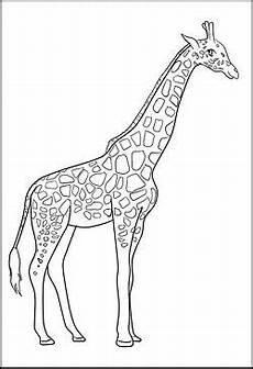 giraffe als malvorlage malvorlagen tiere giraffen