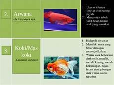 Macam Macam Ikan Hias Air Tawar Dan Air Laut