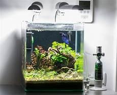 nano aquarium 30l nano 30l dennerle
