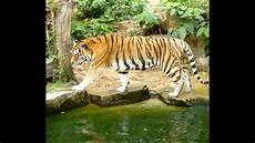 am zoo zoo antwerp belgium
